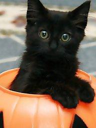 Kitten s, Black non porn, Funny porn, Funny